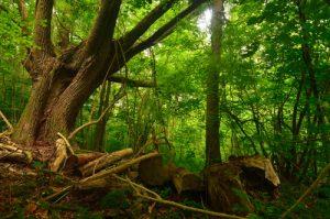 La forêt de Montenach<br> Réserve de Montenach