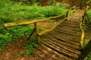 La forêt de Montenach<br> Réserve Naturelle Nationale de Montenach