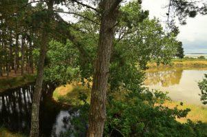 L'Espace Naturel Sensible des Marais du Duer<br>  Parc Naturel Régional du Golfe du Morbihan