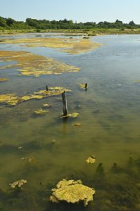 L'Espace Naturel Sensible du Marais de la Villeneuve<br> Parc Naturel Régional du Golf du Morbihan