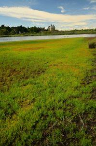 L'Espace Naturel Sensible du Marais du Suscinio<br> Parc Naturel Régional du Golf du Morbihan