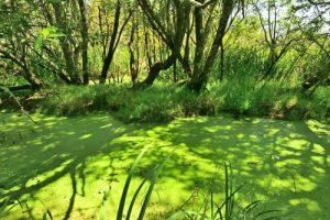L'Espace Naturel Sensible du Marais du Suscinio<br> Parc Naturel Régional du Golfe du Morbihan