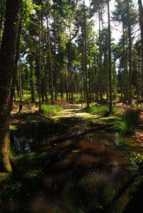 Forêt près du Château de Bilstein<br> Parc Naturel Régional des Ballons des Vosges