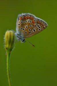 Papillon<br> Réserve de Biosphère du Bassin de la Dordogne