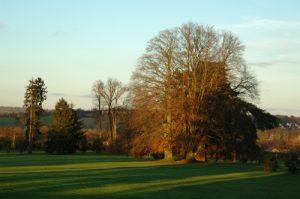 Le Hêtre pourpre (Fagus sylvatica purpurea)<br> Site classé de la vallée de La Brosse et de La Gondoire