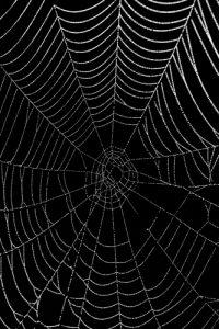 Toile d'araignée au soleil<br> Réserve de Marne &amp; Gondoire