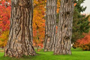 Couleurs automnales du Parc du château de Rentilly<br> Réserve de Marne &amp; Gondoire