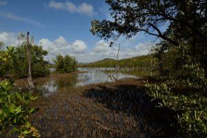 Trace des Caps à Baie des Anglais<br> Parc Naturel Régional de La Martinique