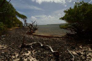 Trace des Caps à la Pointe Coton<br> Parc Naturel Régional de La Martinique