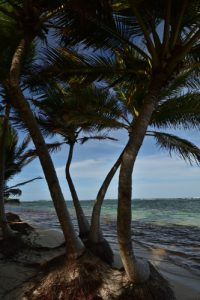 La Trace des Caps à Cap Chevalier<br> Parc Naturel Régional de La Martinique