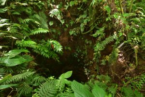 Forêt hygrophile de Sainte-Cécile<br> Parc Naturel Régional de La Martinique