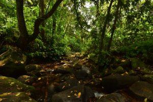 Forêt du Saut d'Argis<br> Parc Naturel Régional de La Martinique
