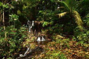 Première cascade du Saut d'Argis<br> Parc Naturel Régional de La Martinique