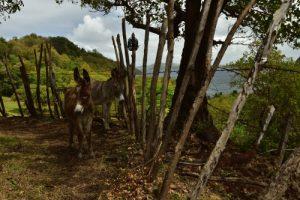 La Pointe Lahoussaye<br> Trace Nord Atlantique de Trinité à Sainte-Marie<br> Parc Naturel Régional de La Martinique