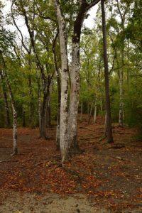 Forêt de Vatable<br> Parc Naturel Régional de La Martinique