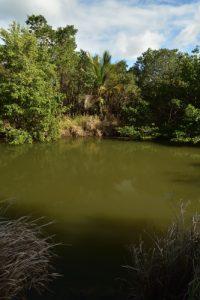 Mangrove de la Baie de Génipa<br> Forêt de Vatable<br> Parc Naturel Régional de La Martinique