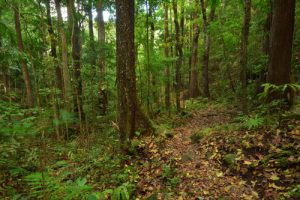 Chemin de la Cascade Anba So<br> Parc Naturel Régional de La Martinique