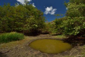 La Grande Mare<br> Morne Champagne<br> Parc Naturel Régional de La Martinique