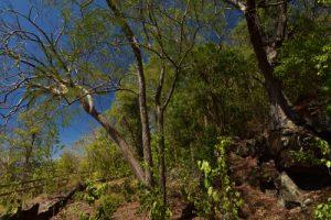 Batterie du Cap Salomon<br> Parc Naturel Régional de La Martinique