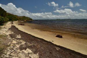 L'Anse Esprit<br> Trace des Caps de Cul-de-Sac Ferré à la Baie des Anglais<br> Parc Naturel Régional de La Martinique