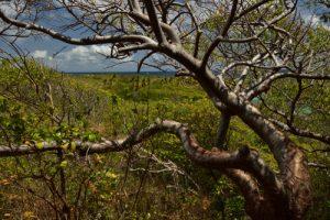 La Pointe les Ébichets<br> Trace des Caps de Cul-de-Sac Ferré à la Baie des Anglais<br> Parc Naturel Régional de La Martinique
