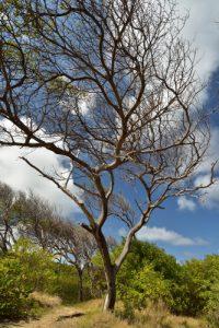 L'Anse Poirier<br> Trace des Caps de Cul-de-Sac Ferré à la Baie des Anglais<br> Parc Naturel Régional de La Martinique