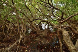 L'étang de la Pointe de l'Etang<br> Trace des Caps de Cul-de-Sac Ferré à la Baie des Anglais<br> Parc Naturel Régional de La Martinique