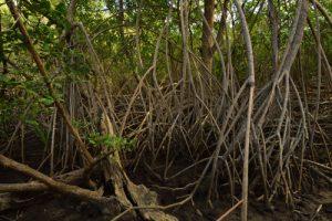 La Pointe de Brunel de la Presqu'île de la Caravelle<br> Parc Naturel Régional de La Martinique