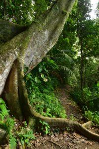 Trace Prêcheur - Grand'Rivière<br> Parc Naturel Régional de La Martinique