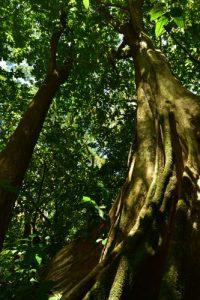 Chemin de la Cascade Couleuvre<br> Parc Naturel Régional de La Martinique