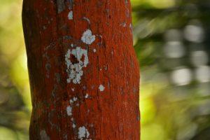 L'Anse à Voile<br> Parc Naturel Régional de La Martinique