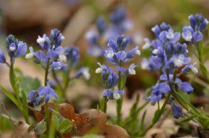 Fleur<br> Espace Naturel Sensible des Bouligons