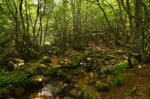 Les Cascades d'Orgon<br> Massif de l'Aigoual<br> Parc Naturel National des Cévennes