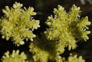 Flore du PNN des Cévennes<br> Le Causse Méjean<br> Parc Naturel National des Cévennes