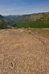 Empreinte de pas de Dinosaure du sous-ordre des Saurischiens<br> Point de vue de Saint-Laurent-de-Trèves<br> Parc Naturel National des Cévennes