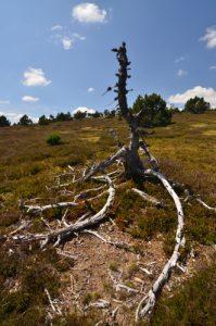 Le sommet du Finiels<br> Le Mont Lozère<br> Parc Naturel National des Cévennes