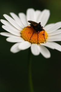 Insecte<br> Parc Naturel Régional du Vercors