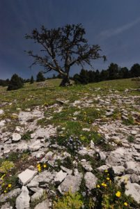 Vallon de Combau<br> Réserve Naturelle Nationale des Hauts Plateaux du Vercors<br> Parc Naturel Régional du Vercors