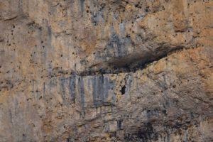 Colonie de Vautours fauves (Gyps fulvus)<br> Le Cirque d'Archiane<br> Parc Naturel Régional du Vercors