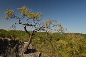 Point de vue du Rocher de la Justice<br> Forêt Domaniale de La Commanderie<br> Parc Naturel Régional du Gâtinais Français