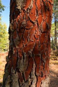 Forêt Domaniale de La Commanderie<br> Parc Naturel Régional du Gâtinais Français