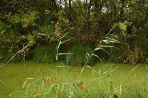 Les Prés salés Ouest de La Teste-de-Buch<br> Parc Naturel Régional des Landes de Gascogne