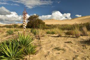 Flore du PNR des Landes de Gascogne<br> La Dune du Pilat<br> Parc Naturel Régional des Landes de Gascogne