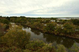 La Réserve Ornithologique du Teich<br> Parc Naturel Régional des Landes de Gascogne