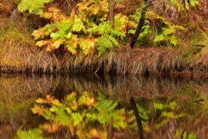 <br>Parc Naturel Régional des Landes de Gascogne