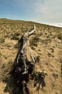 Le Cap Ferret<br> Parc Naturel Régional des Landes de Gascogne