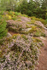 Cromlech du Jardin des Fées<br> La Grande Côte<br> Massif des Vosges centrales