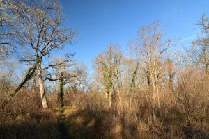 Espace Naturel Sensible du Grand Montauger