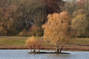 Réserve Naturelle Régionale du Grand-Voyeux