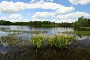 Réserve Naturelle Régionale de la Bassée
